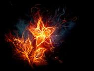 燃烧的花朵图片6