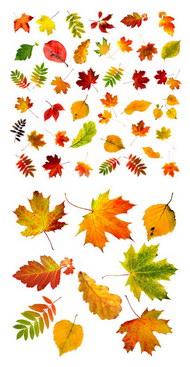 秋天的故事 秋天的故事素材 免费秋天的故事素材 秋天的故事矢量素材