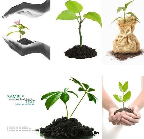 树苗,小树,手,双手,实用元素,和,矢量图,矢量图,平面设计,shu,小树苗