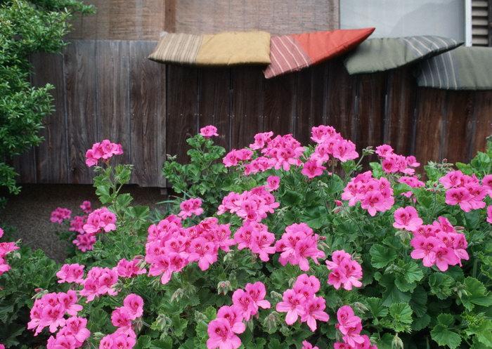 日本花朵图片,日本花朵,国外旅游风景,日本名胜景观,摄影,风景,2094x2