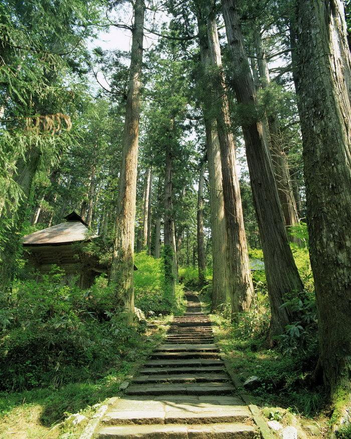 日本树林风景图片-素彩图片大全