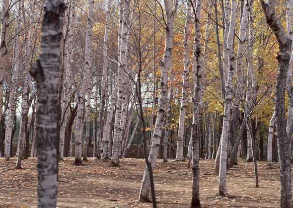 树林图片-素彩图片大全