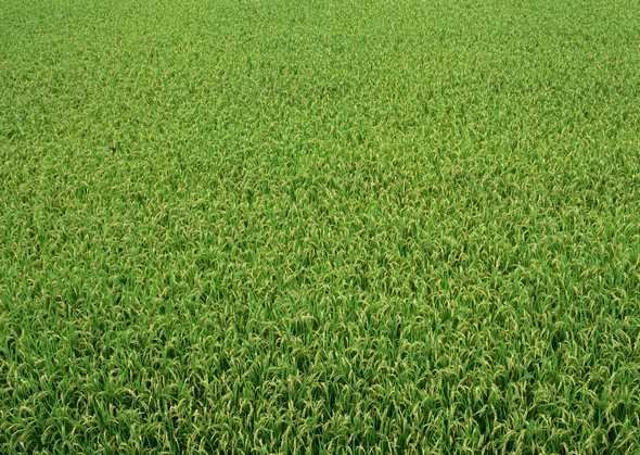 农作物图片,风景图片,乡村田园,农作物,田园,乡村