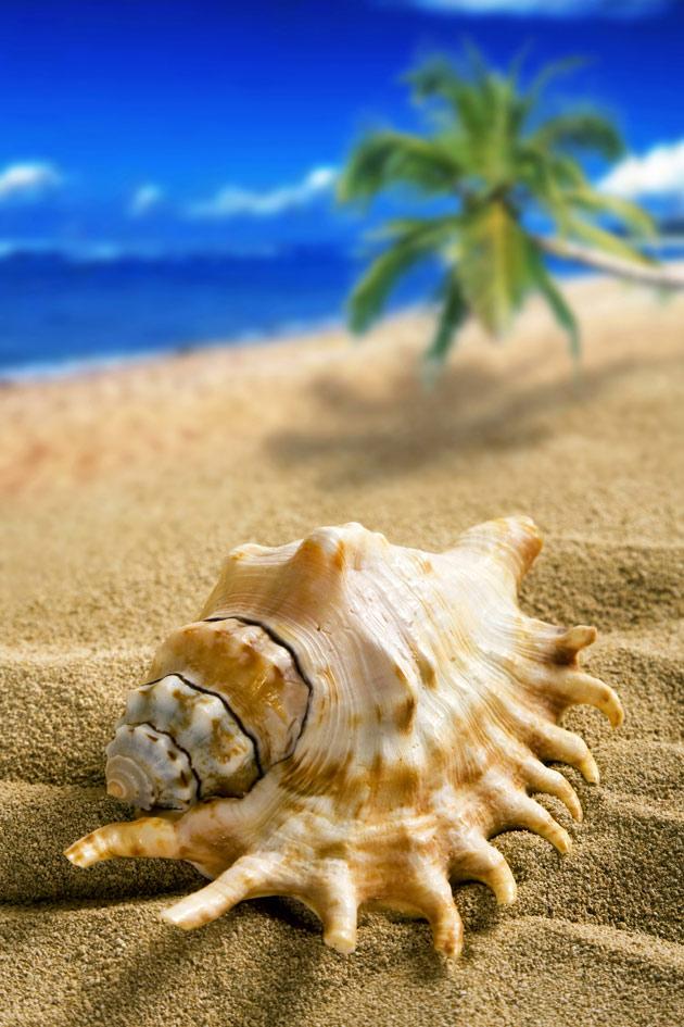 沙滩海螺图片,风景图片,海边图片,海螺,椰子树,沙子,海边