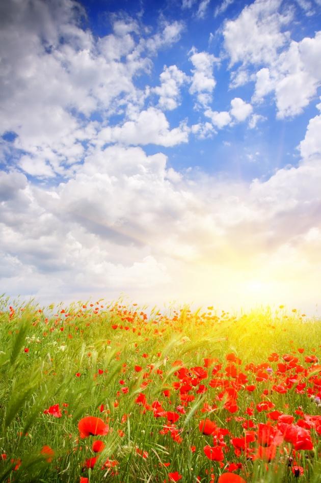 花海自然图片,风景图片,乡村田园,花海,自然,草原,植物