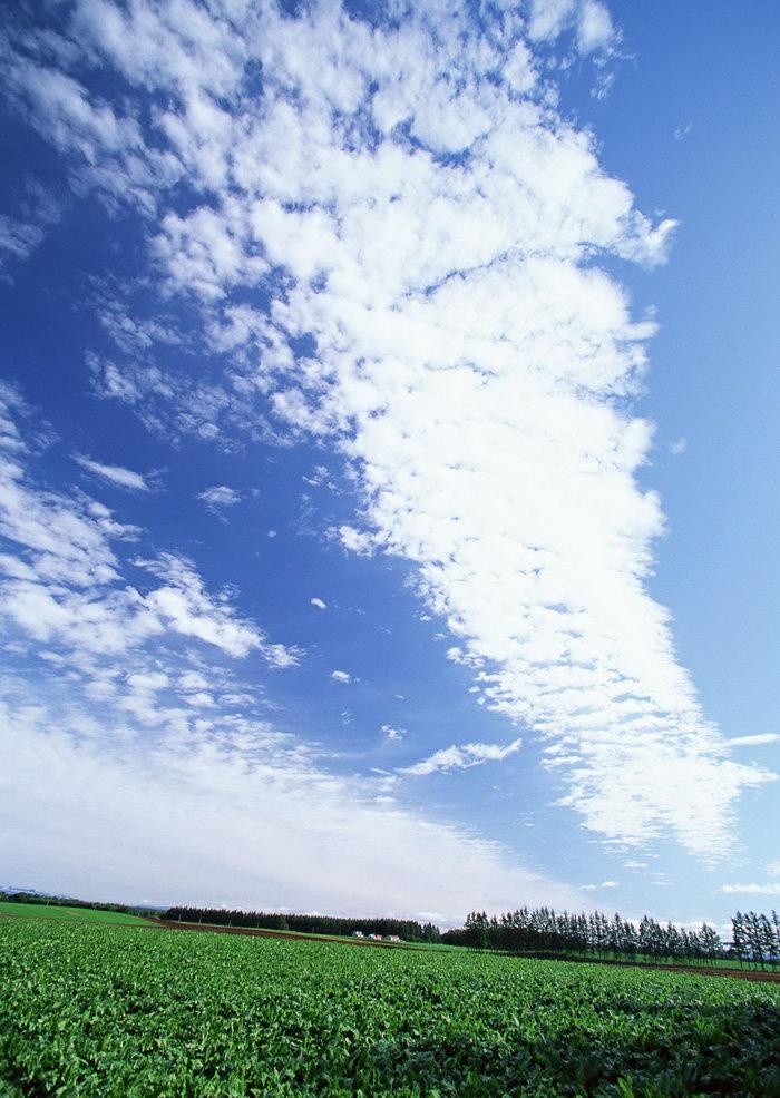 蓝天白云天空美景图片,蓝天白云,天空美景,高空美景,天空美景,风景