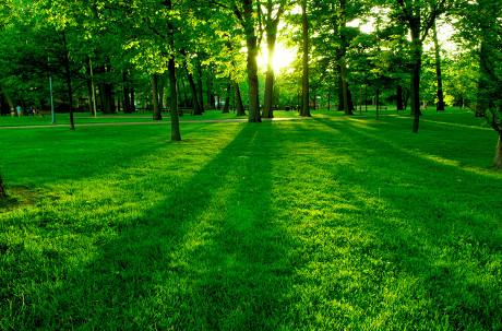 树木与草地黄昏图片-素彩图片大全
