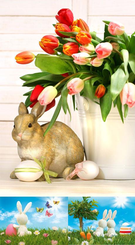 可爱小兔子图片-素彩图片大全