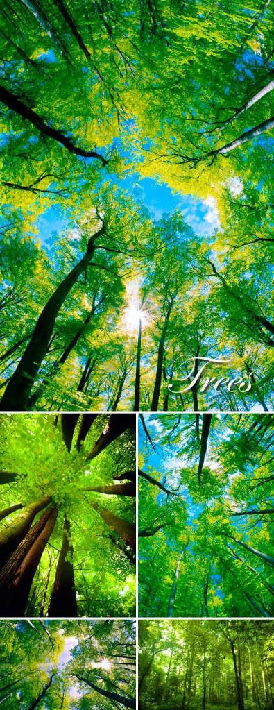 茂盛的树木图片,树木,森林,茂盛,天空,树林,绿树,茂盛的树木,你,绿树
