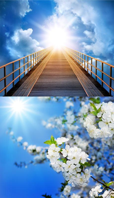 明媚阳光自然风景图片,花朵,壁纸,植物,蓝天,梯子,其他,明媚阳光自然