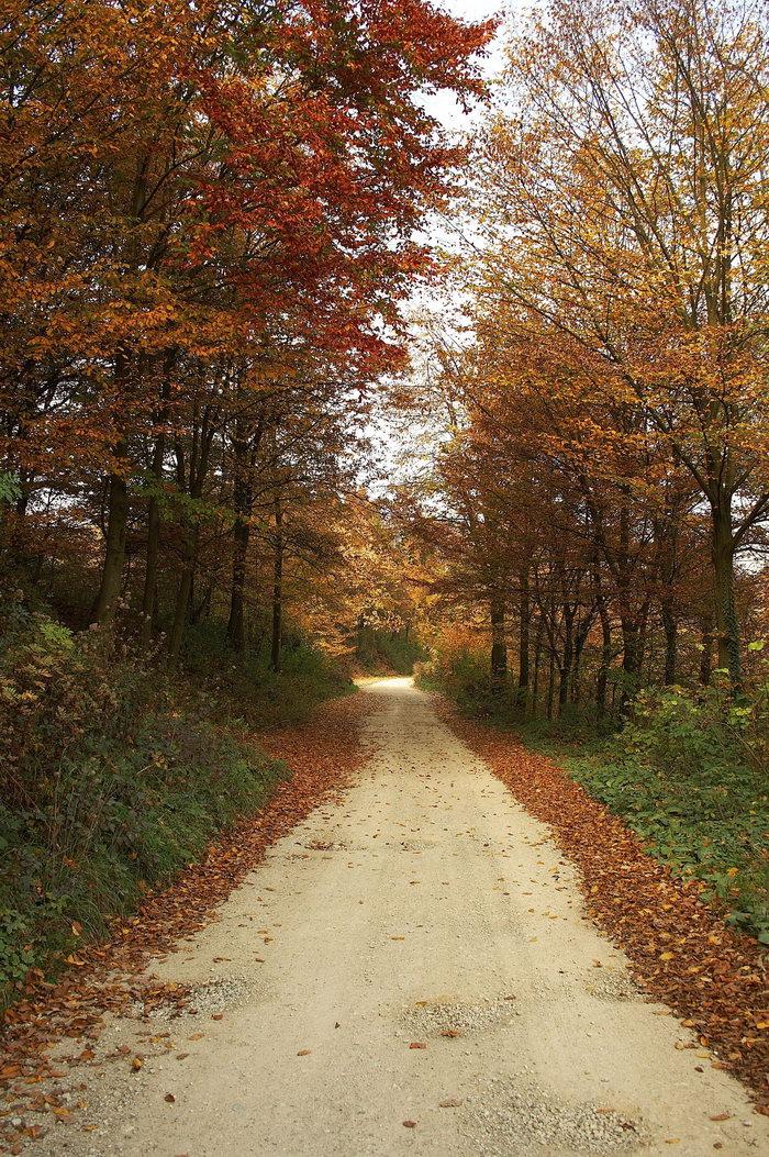 山间森林小路图片