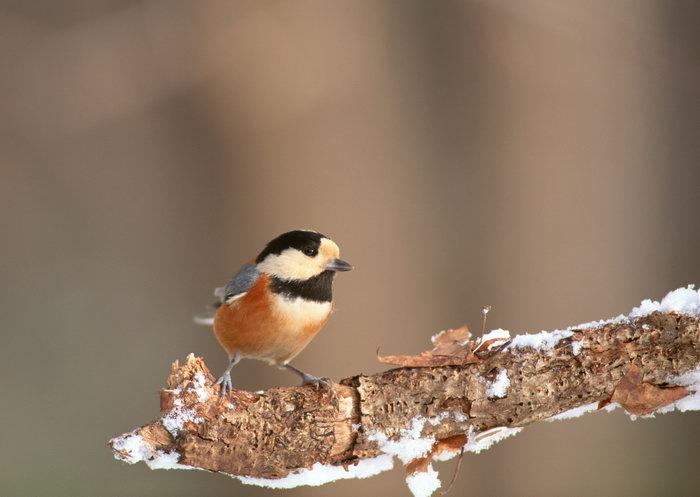树枝上的鸟图片,树枝上的鸟,飞行鸟类动物,摄影,动物,2094x2950像素
