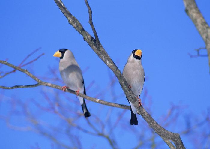 枝头上的鸟图片,枝头上的鸟,飞行鸟类动物,摄影,动物,2094x2950像素