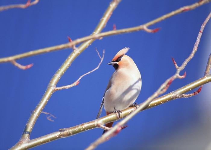 壁纸 动物 鸟 鸟类 雀 700_497