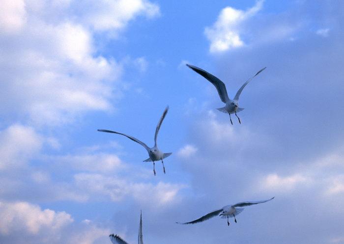 飞翔的鸟图片,飞翔的鸟,飞行鸟类动物,摄影,动物,2094x2950像素