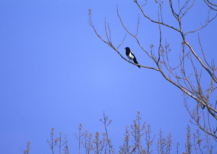 树上的鸟图片,树上的鸟,飞行鸟类动物,摄影,动物,2094x2950像素