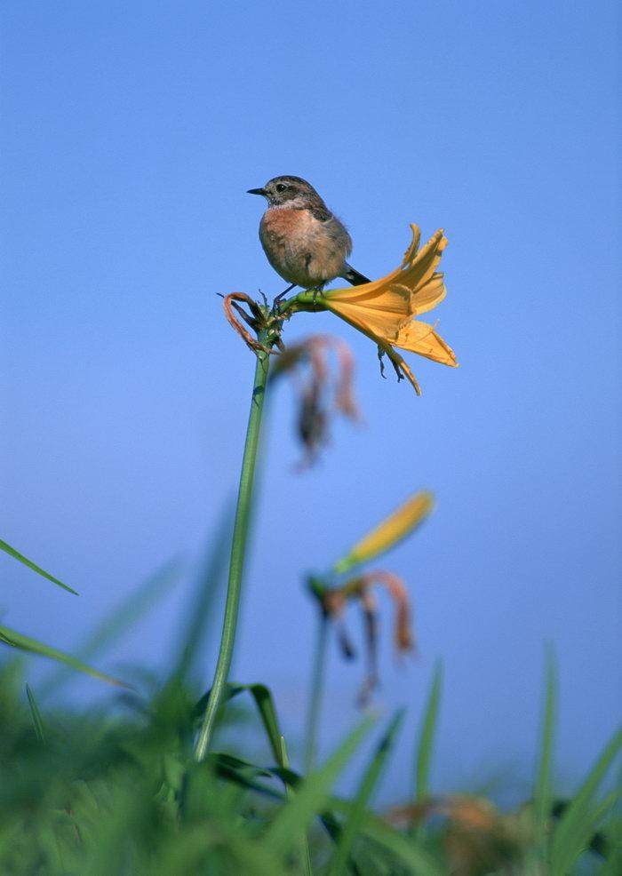 鸟类图片,鸟类,树林,飞行鸟类动物,摄影,动物,2094x2950像素