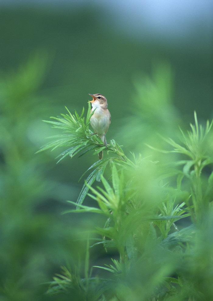 小鸟图片,小鸟,树林,飞行鸟类动物,摄影,动物,2094x2950像素