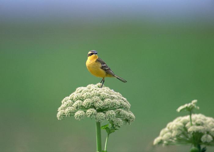 鸟图片,小鸟,树林,飞行鸟类动物,摄影,动物,2094x2950像素