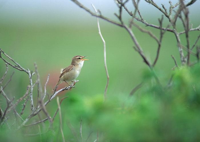 小麻雀图片,小麻雀,树林,飞行鸟类动物,摄影,动物,2094x2950像素