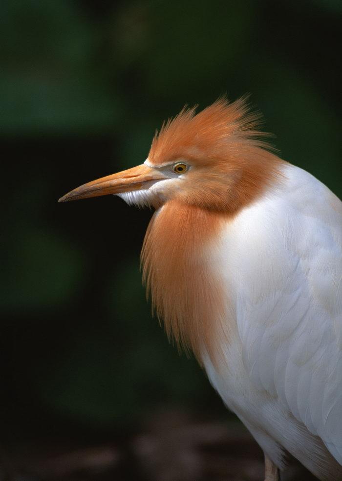 鸟类图片,小鸟,树林,飞行鸟类动物,摄影,动物,2094x2950像素