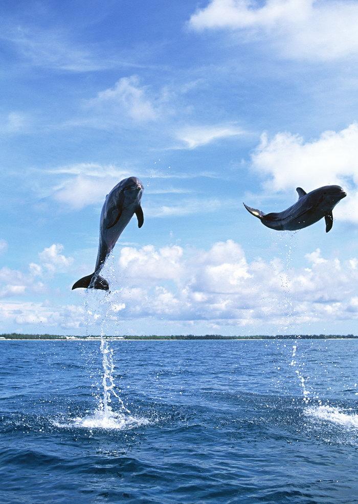 海豚图片-素彩图片大全