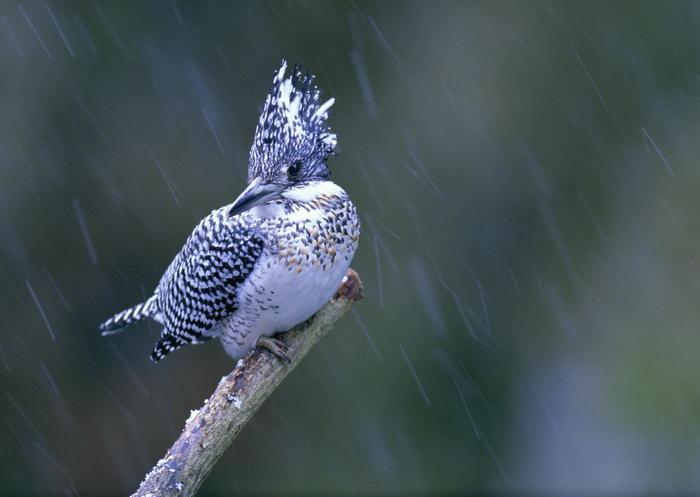 啄木鸟图片,小鸟,树林,飞行鸟类动物,摄影,动物,2094x2950像素