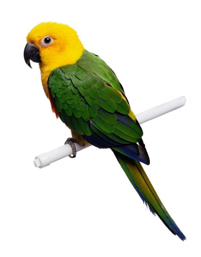 可爱的鹦鹉图片