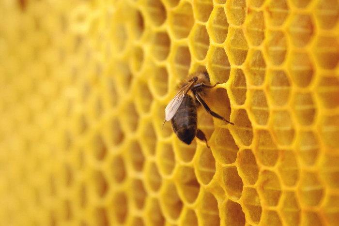 蜜蜂蜂巢图片图片