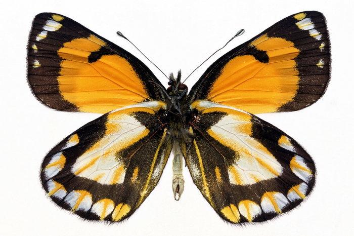 蝴蝶图片,蝴蝶,昆虫,爬行动物,2043x3071像素