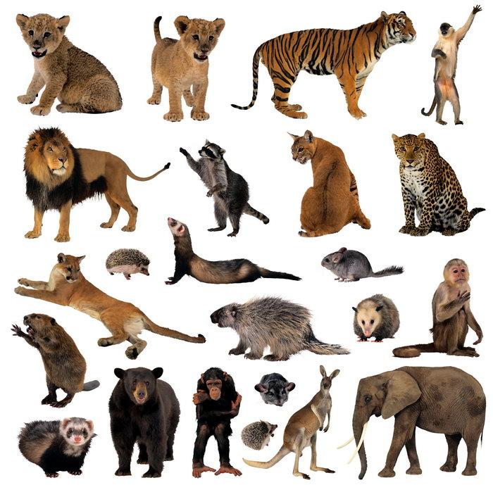 动物-素彩图片大全