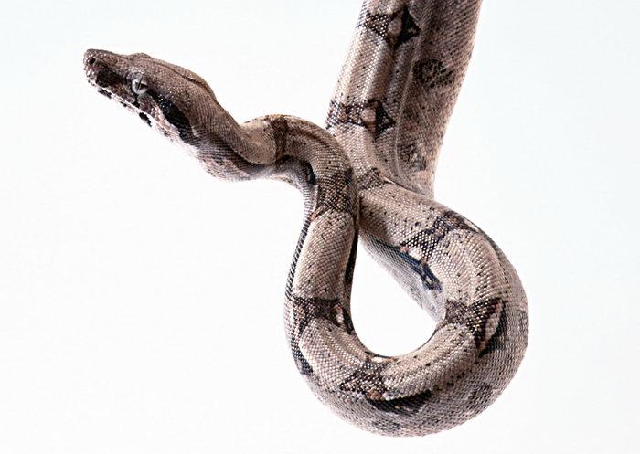 蛇图片-素彩图片大全