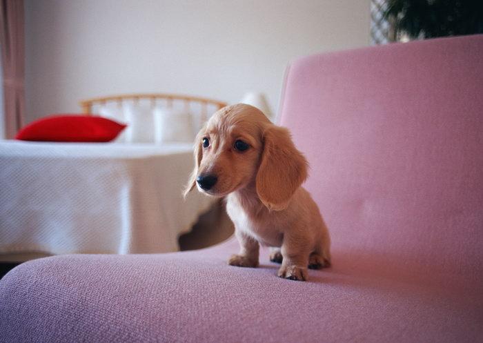 淘气的小狗图片-素彩图片大全