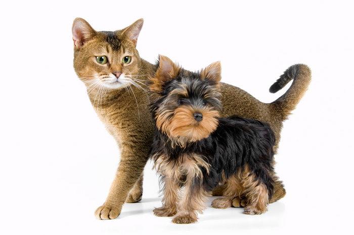 小猫小狗图片-素彩图片大全