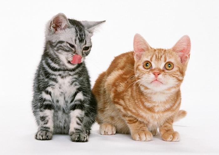 两只小猫图片
