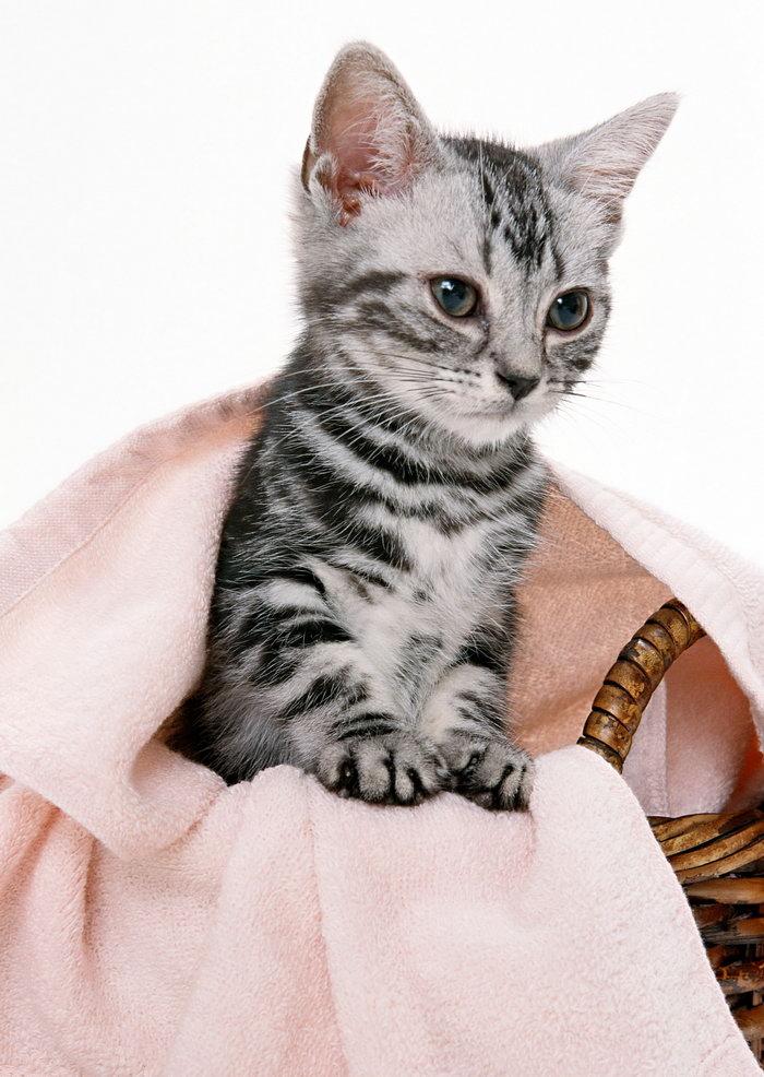 小猫图片,小猫,猫狗,摄影,动物,2094x2950像素