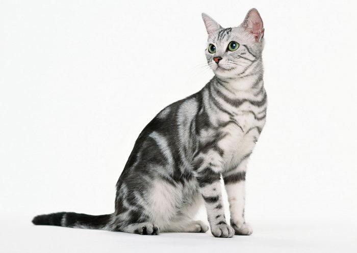 可爱小猫图片-素彩图片大全