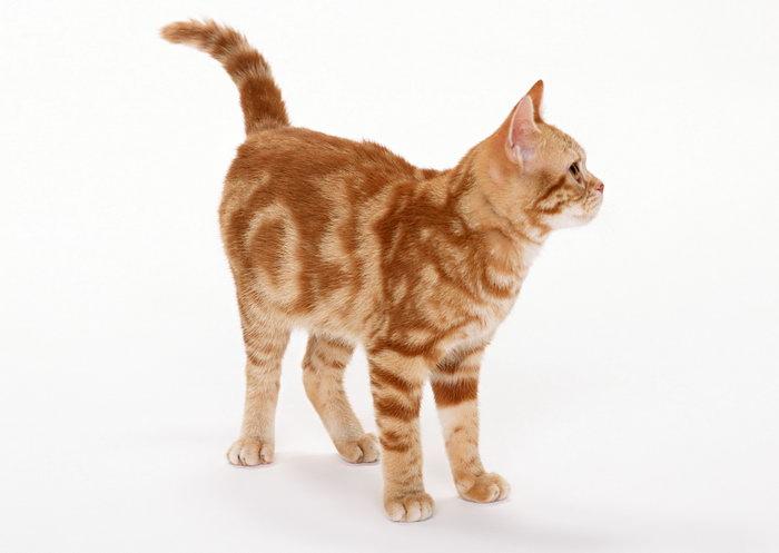 可爱的小猫图片,可爱的小猫,猫狗,摄影,动物,2094x2950像素