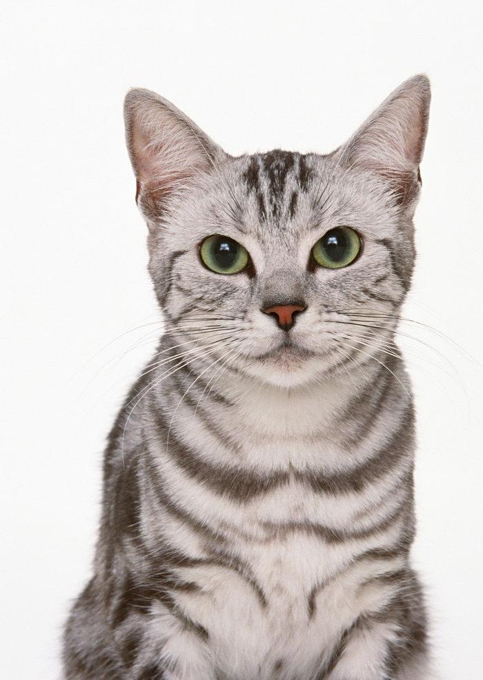 壁纸 动物 猫 猫咪 小猫 桌面 700_986 竖版 竖屏 手机