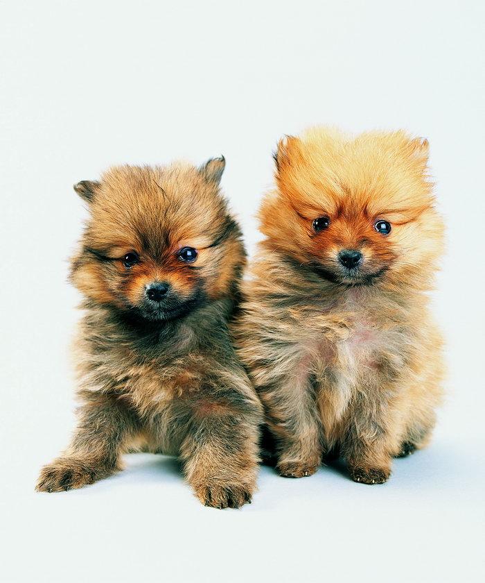 两只超可爱的小狗图片-素彩图片大全