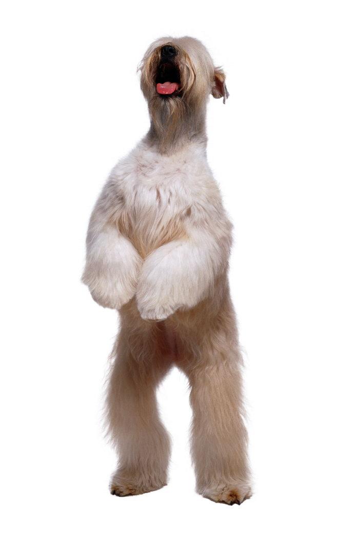 可爱狗图片,可爱狗,猫狗,动物,2563x3882像素