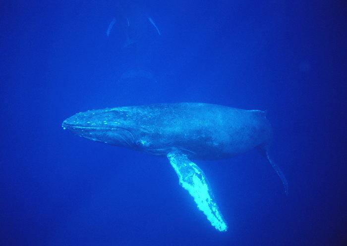 蓝鲸的彩铅手绘