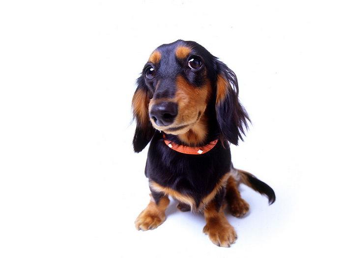 黑色可爱小狗图片-素彩图片大全