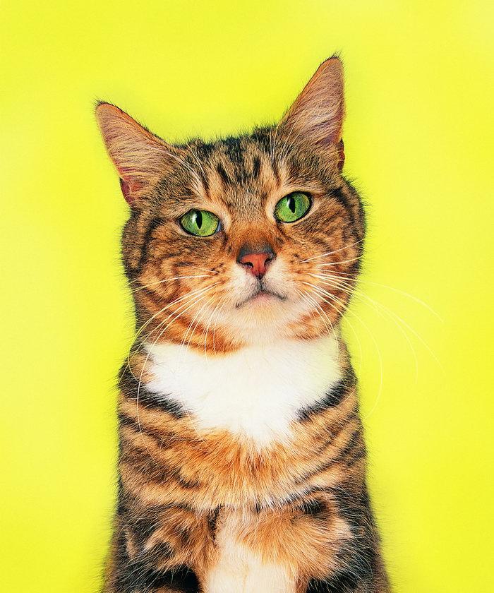 可爱的小猫图片-素彩图片大全