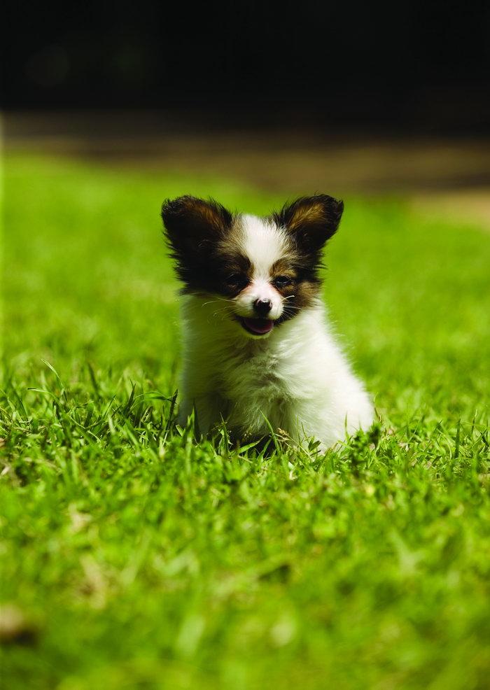 可爱小狗图片-素彩图片大全