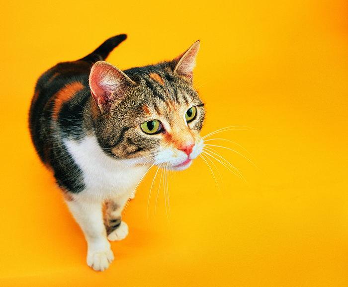 可爱小花猫图片