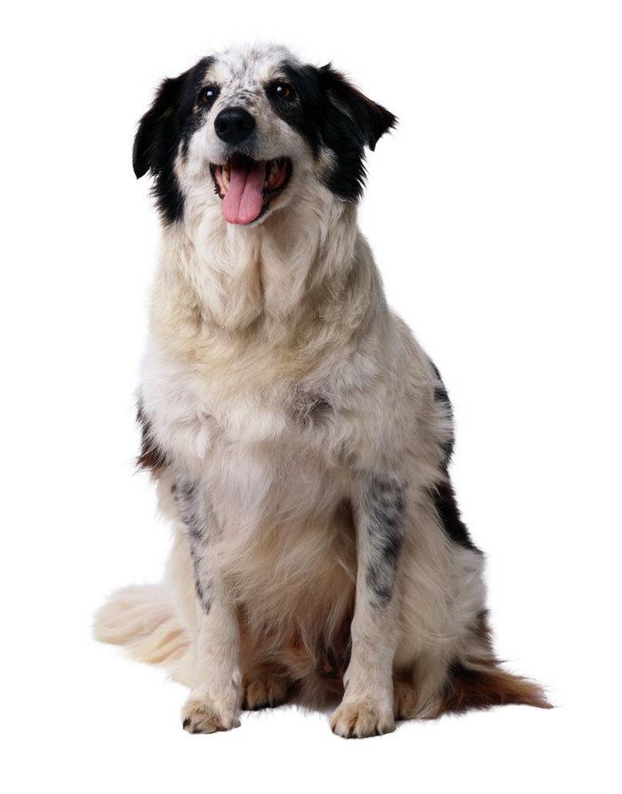 可爱的小狗图片-素彩图片大全