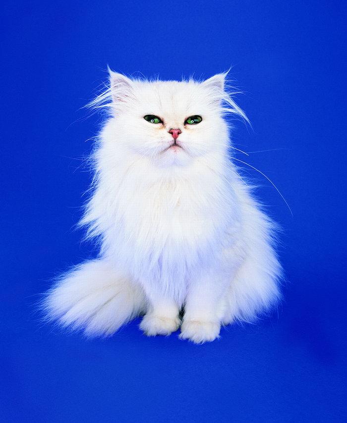 壁纸 动物 猫 猫咪 小猫 桌面 700_852