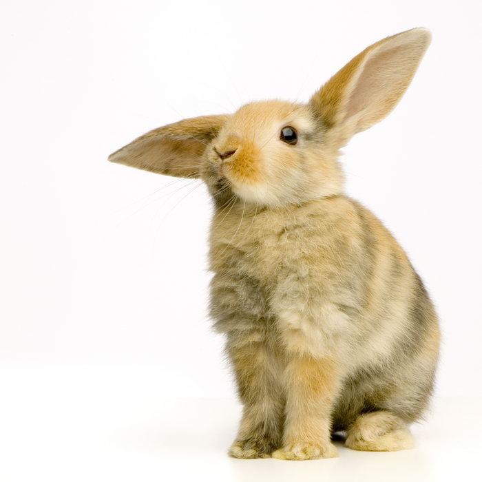 可爱的兔子图片-素彩图片大全