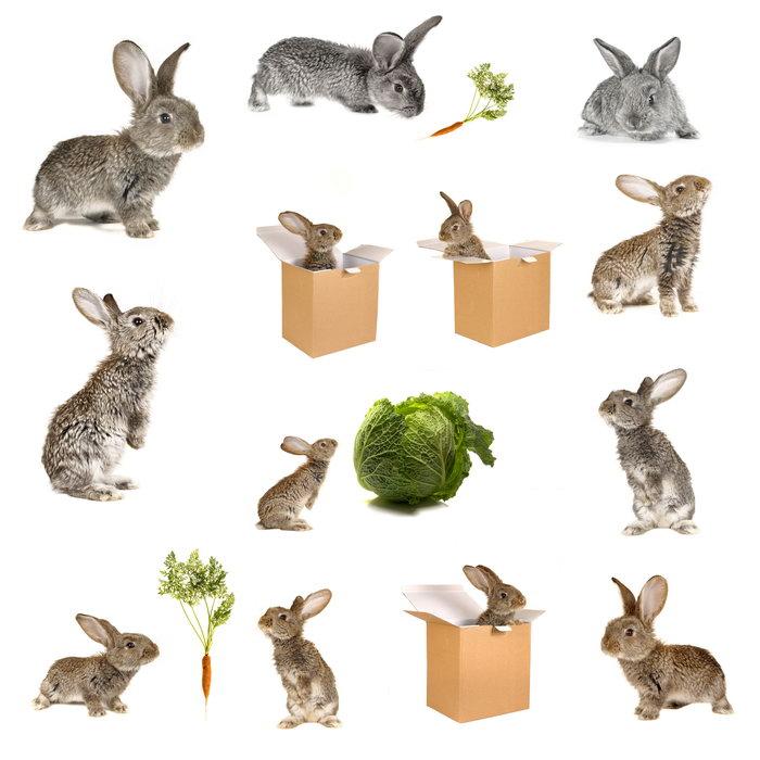 灰色兔子图片,灰色兔子,小兔子,兔子,灰兔,箱子,纸箱,篮子,小白兔,胡